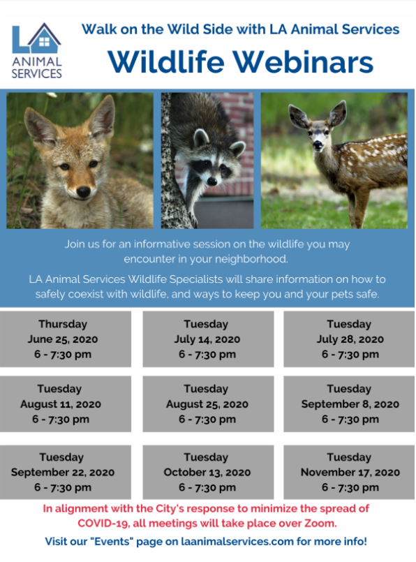 Wildlife Workshop
